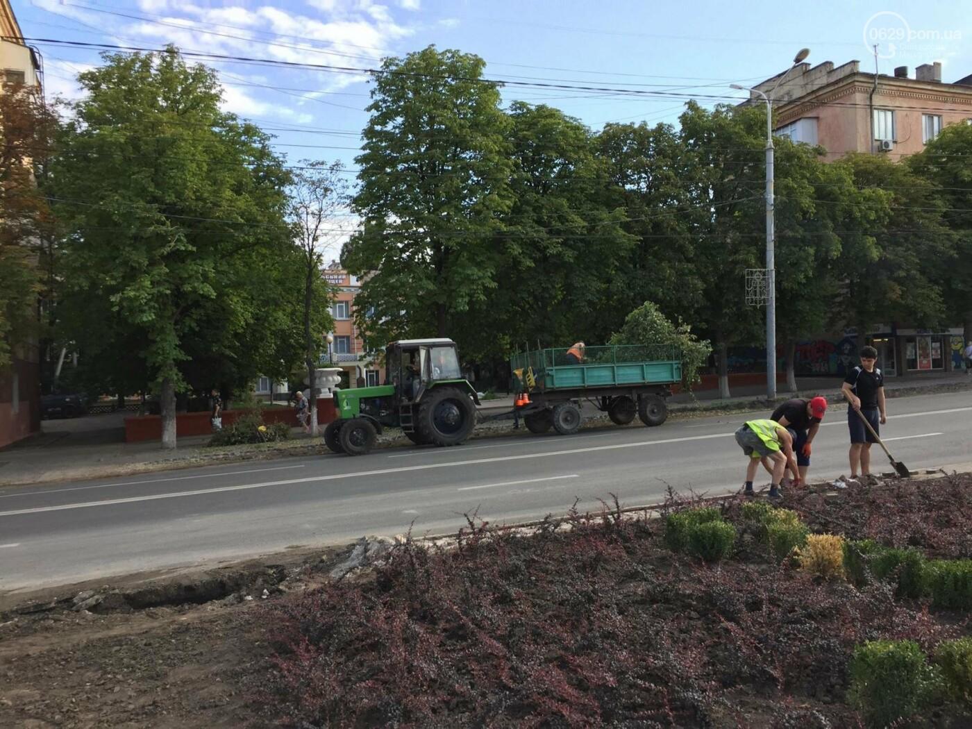 Что потерял Мариуполь, уничтожив  райские яблочки на проспекте Мира - ФОТО, ВИДЕО, фото-2
