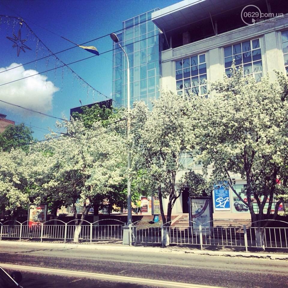 Что потерял Мариуполь, уничтожив  райские яблочки на проспекте Мира - ФОТО, ВИДЕО, фото-4