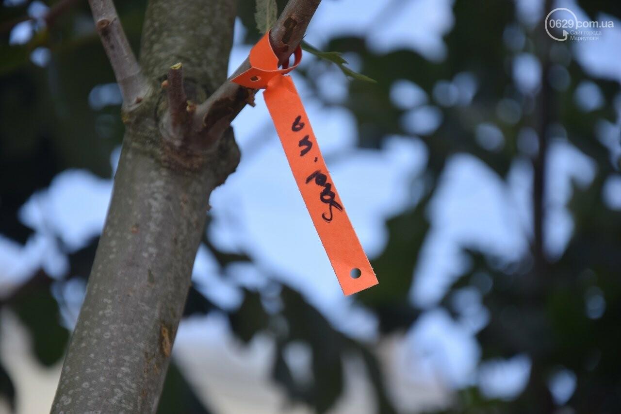 Платаны, клены, сакуры: в Мариуполе под палящим солнцем начали высаживать деревья, - ФОТО, ВИДЕО, фото-1