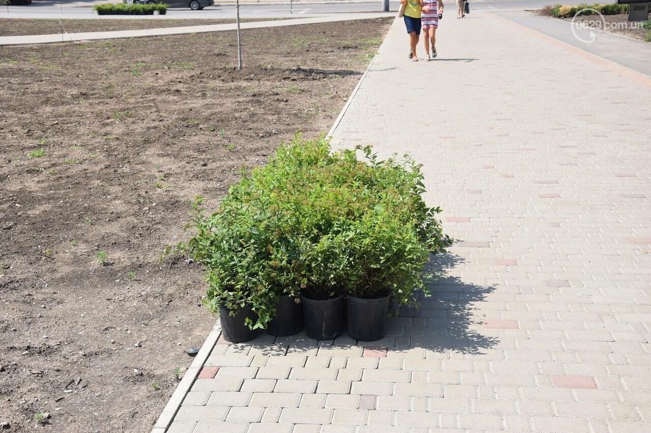 Платаны, клены, сакуры: в Мариуполе под палящим солнцем начали высаживать деревья, - ФОТО, ВИДЕО, фото-6