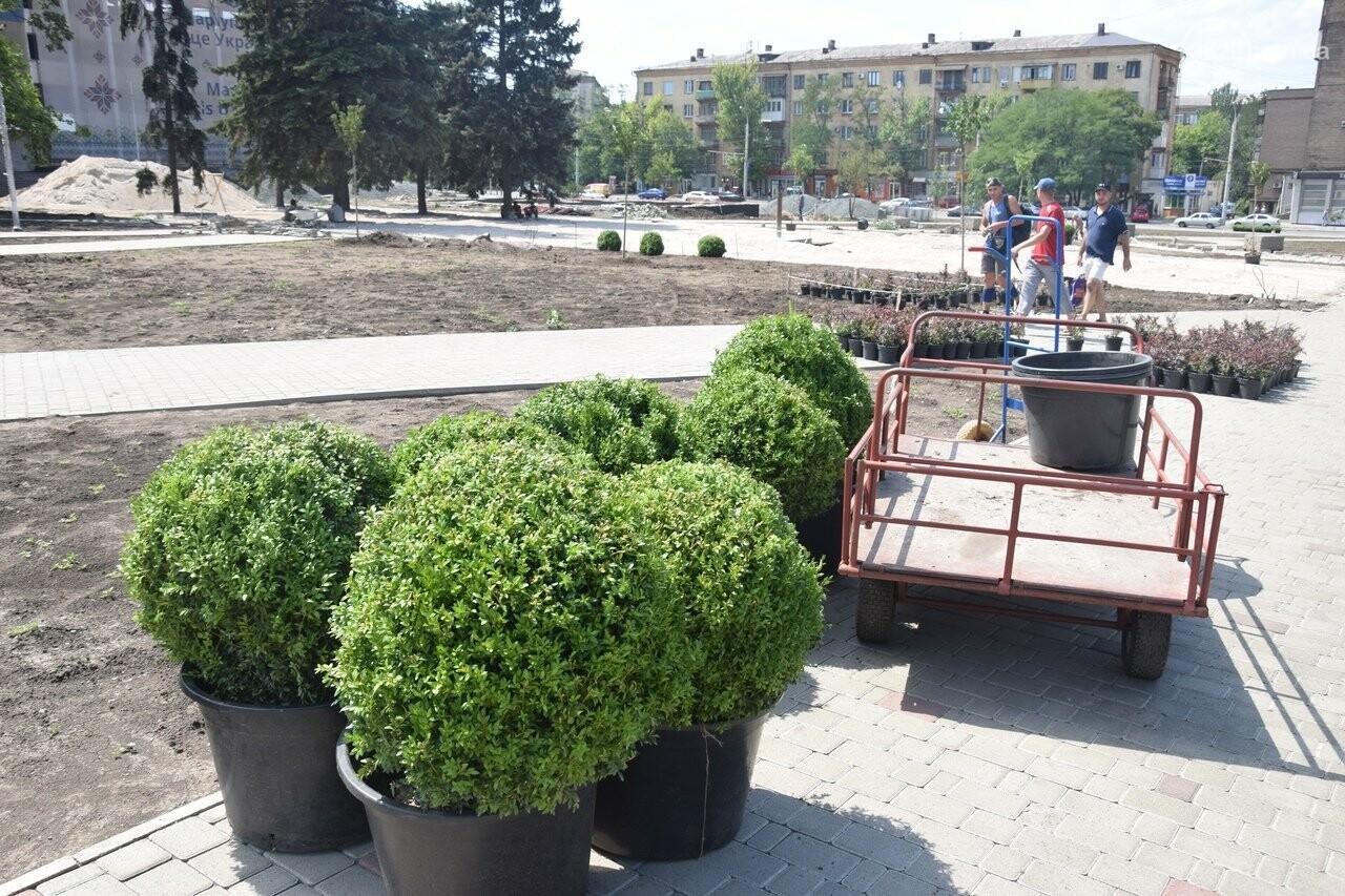 Платаны, клены, сакуры: в Мариуполе под палящим солнцем начали высаживать деревья, - ФОТО, ВИДЕО, фото-4