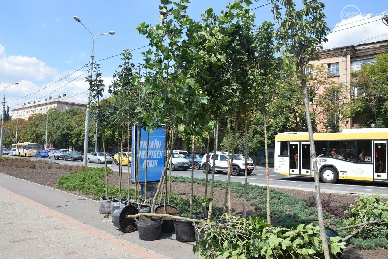 Платаны, клены, сакуры: в Мариуполе под палящим солнцем начали высаживать деревья, - ФОТО, ВИДЕО, фото-5