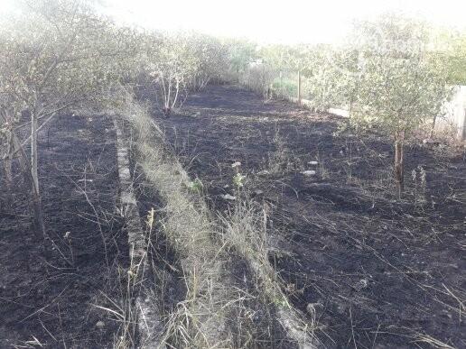 В Мариуполе сгорело 3 дачных участка, - ФОТОФАКТ, фото-7
