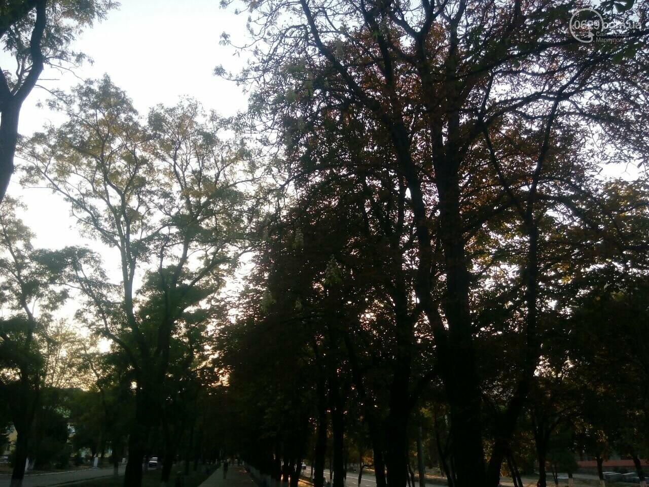 В Мариуполе во второй раз зацвели каштаны, - ФОТОФАКТ, фото-1
