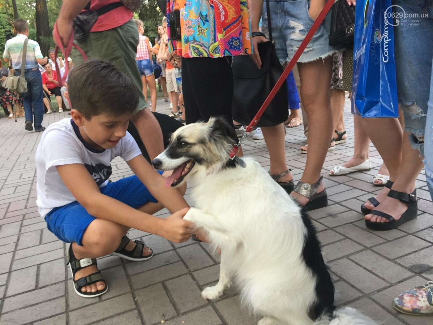 """""""Моя дворНяшка"""". В Мариуполе выбрали самую лучшую беспородную собаку, -  ФОТО, ВИДЕО, фото-12"""