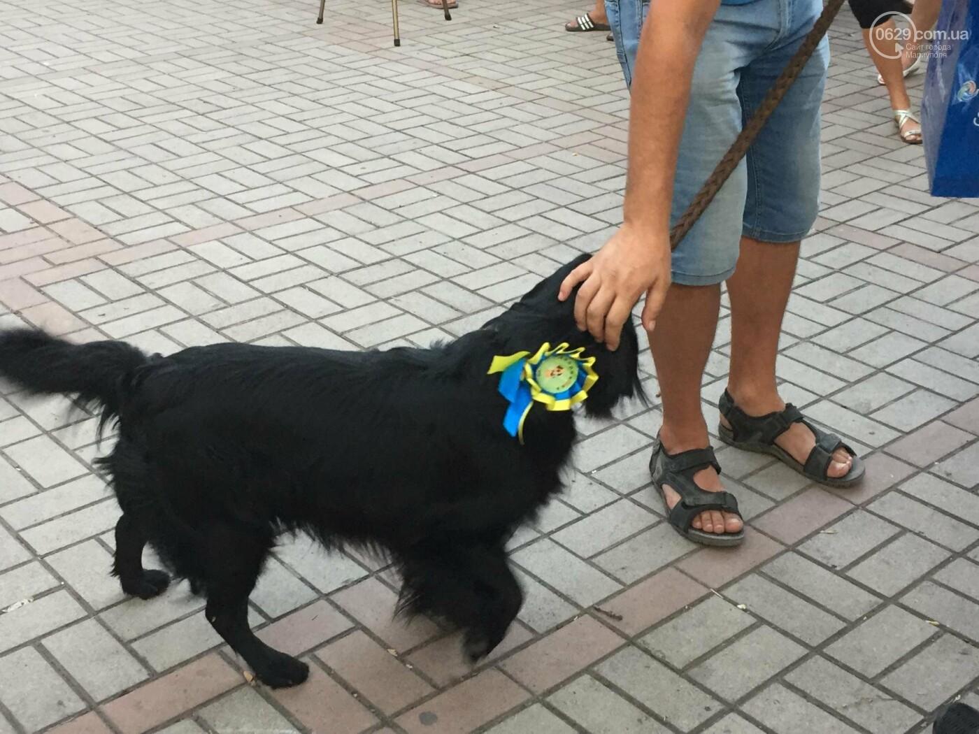 """""""Моя дворНяшка"""". В Мариуполе выбрали самую лучшую беспородную собаку, -  ФОТО, ВИДЕО, фото-11"""