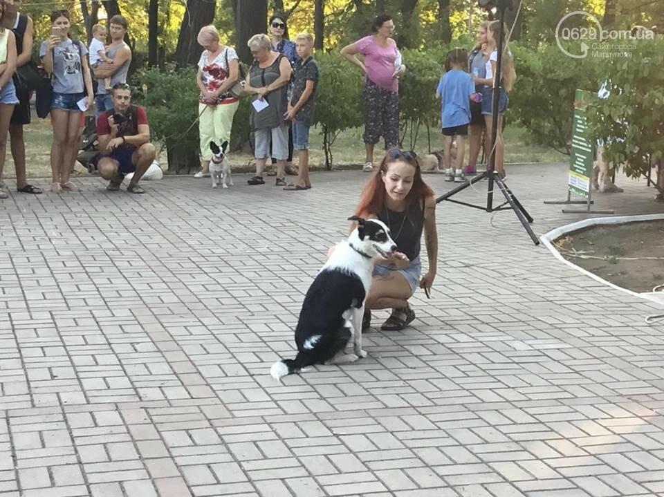 """""""Моя дворНяшка"""". В Мариуполе выбрали самую лучшую беспородную собаку, -  ФОТО, ВИДЕО, фото-3"""