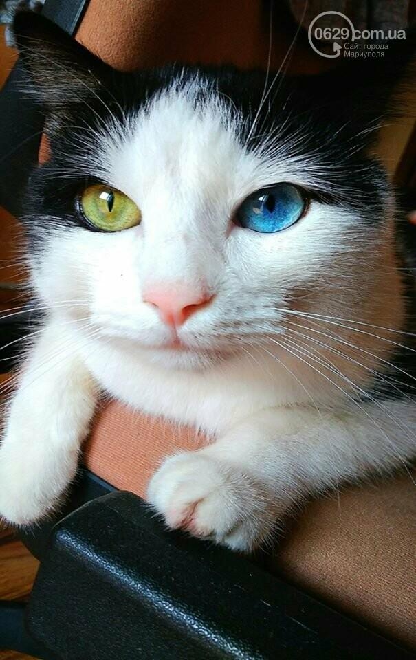 В Мариуполе выбрали самую красивую  беспородную кошечку,-Фотофакт, ВИДЕО, фото-3