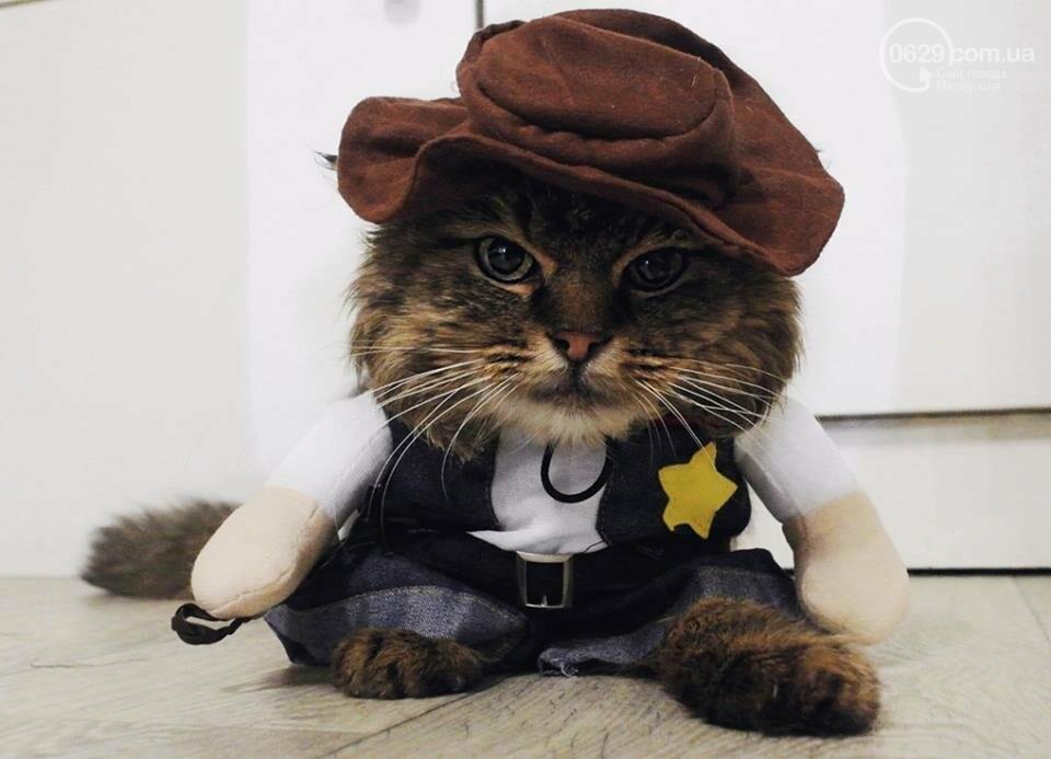 В Мариуполе выбрали самую красивую  беспородную кошечку,-Фотофакт, ВИДЕО, фото-1