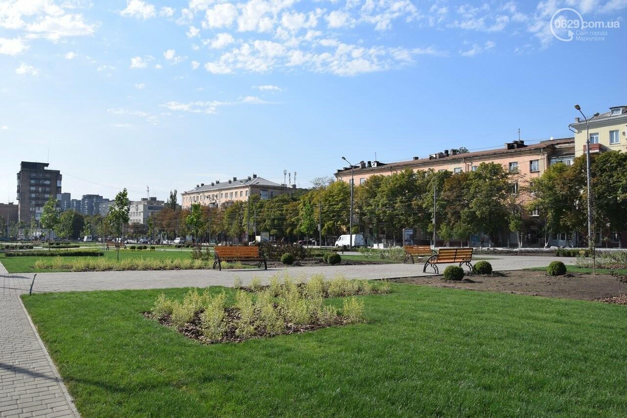 На Греческой площади в Мариуполе засыхают кустарники, но зазеленел газон, - ФОТОРЕПОРТАЖ, ВИДЕО, фото-7