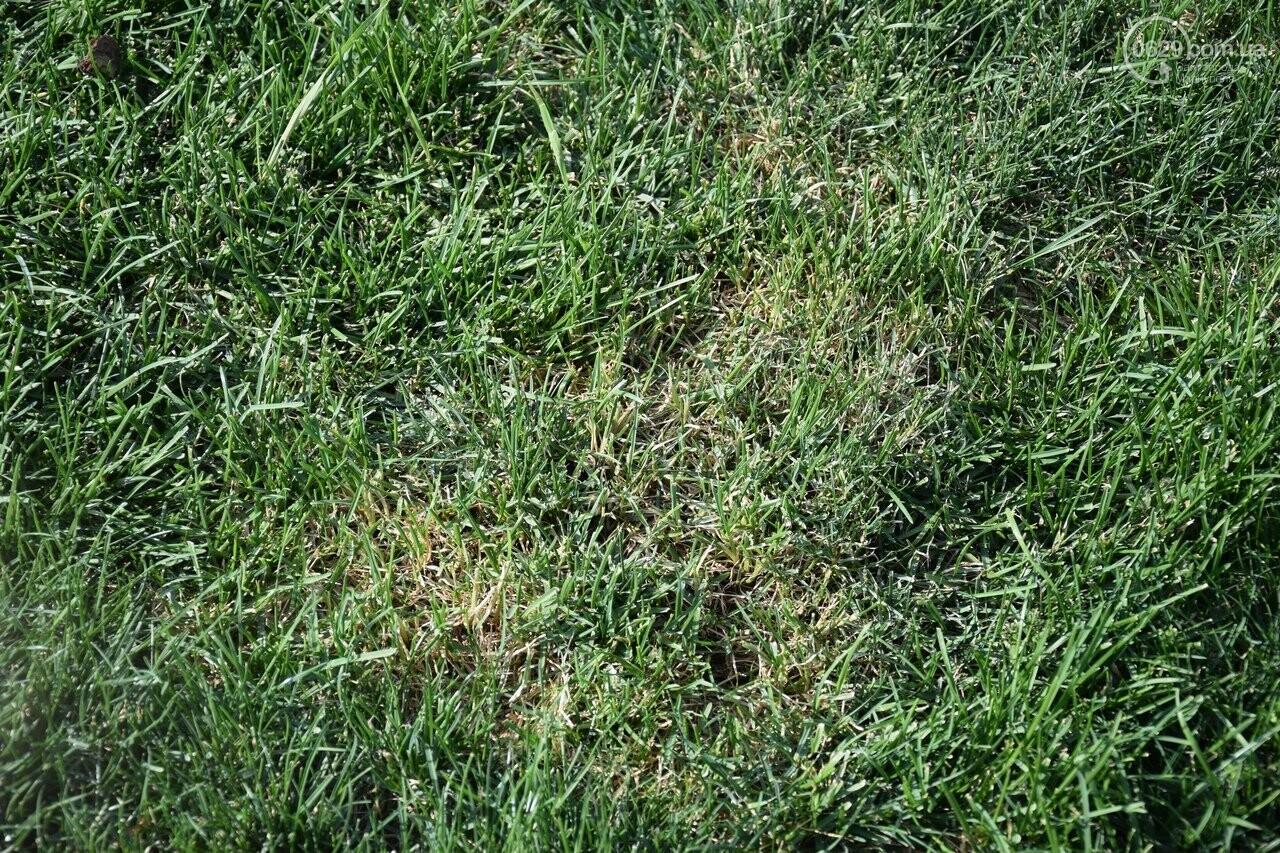На Греческой площади в Мариуполе засыхают кустарники, но зазеленел газон, - ФОТОРЕПОРТАЖ, ВИДЕО, фото-13