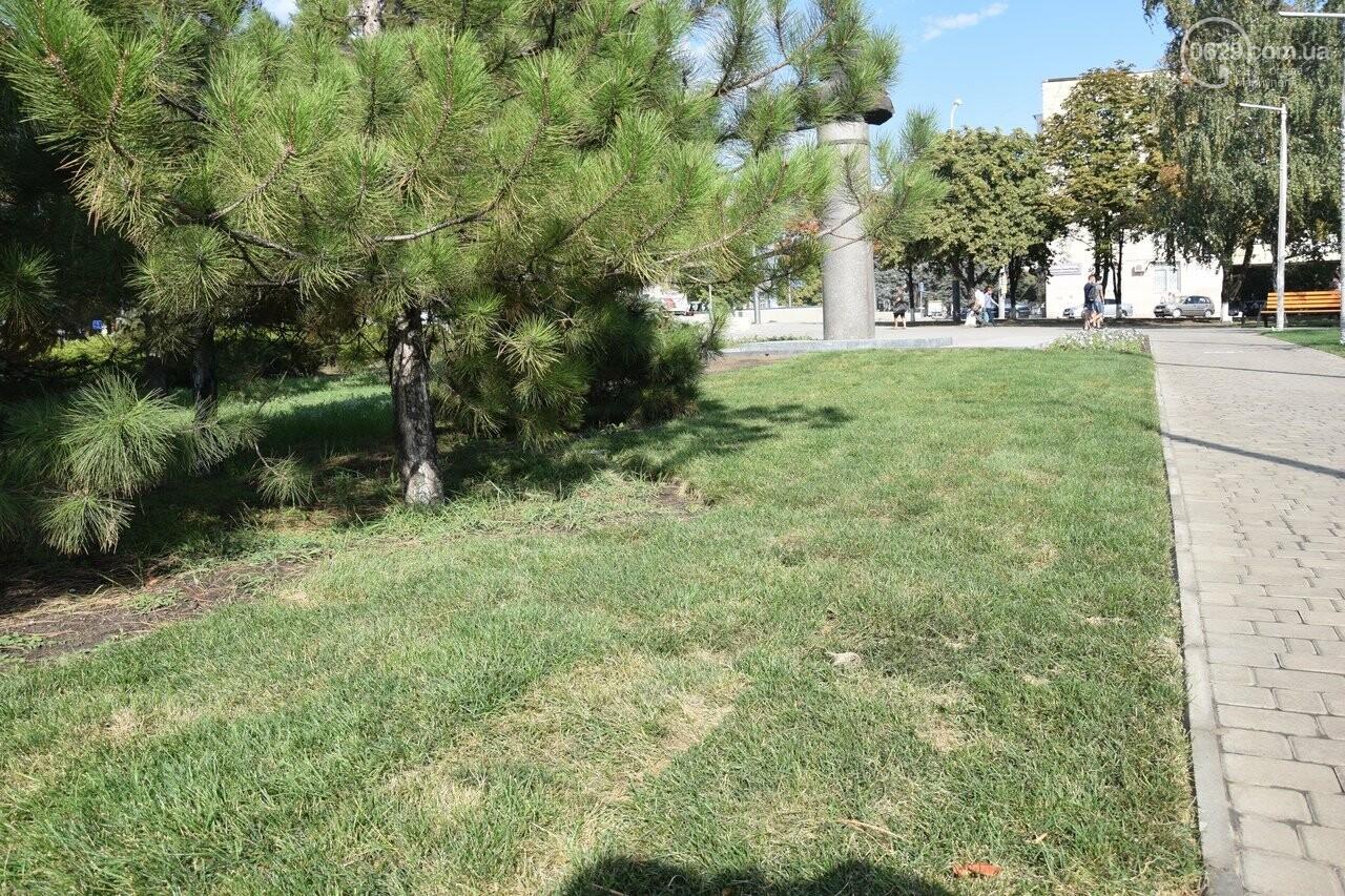 На Греческой площади в Мариуполе засыхают кустарники, но зазеленел газон, - ФОТОРЕПОРТАЖ, ВИДЕО, фото-12