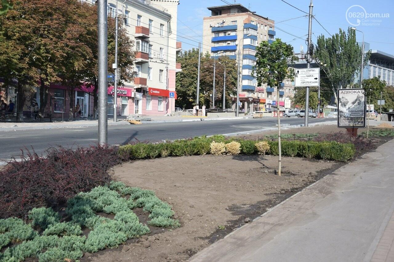 На Греческой площади в Мариуполе засыхают кустарники, но зазеленел газон, - ФОТОРЕПОРТАЖ, ВИДЕО, фото-38