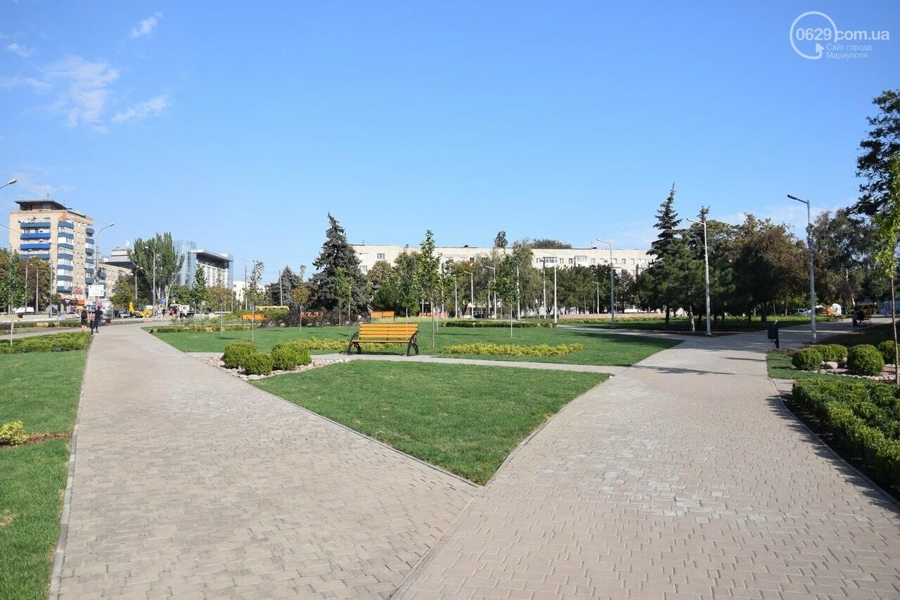 На Греческой площади в Мариуполе засыхают кустарники, но зазеленел газон, - ФОТОРЕПОРТАЖ, ВИДЕО, фото-1