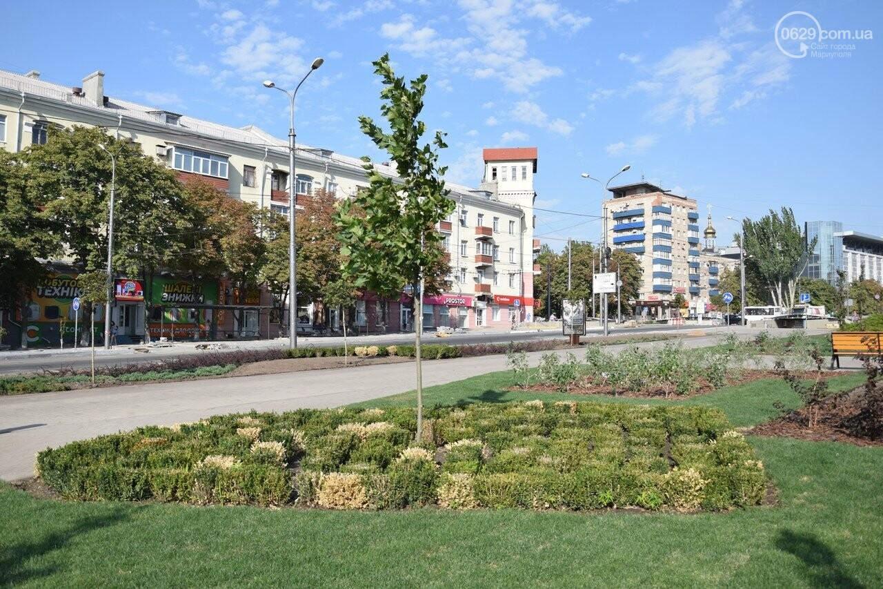 На Греческой площади в Мариуполе засыхают кустарники, но зазеленел газон, - ФОТОРЕПОРТАЖ, ВИДЕО, фото-22