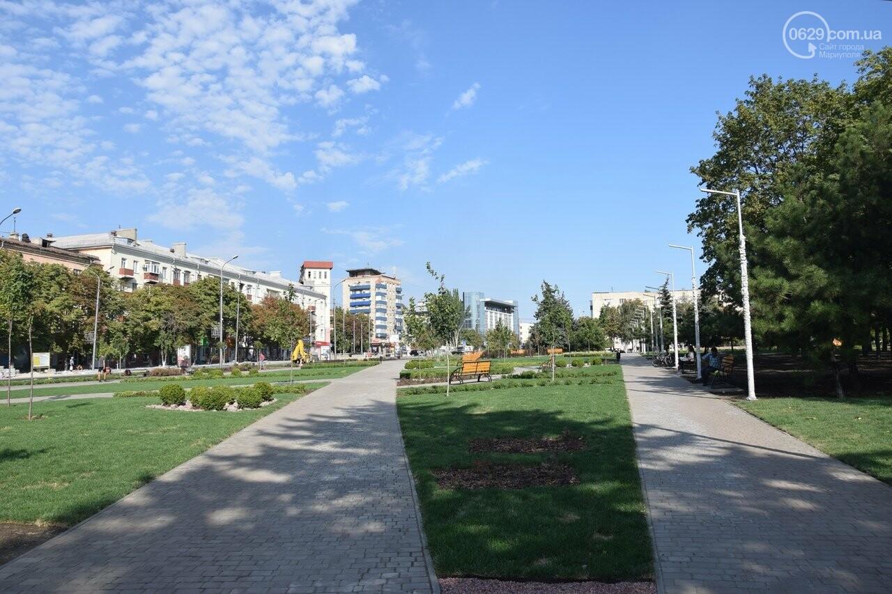 На Греческой площади в Мариуполе засыхают кустарники, но зазеленел газон, - ФОТОРЕПОРТАЖ, ВИДЕО, фото-3