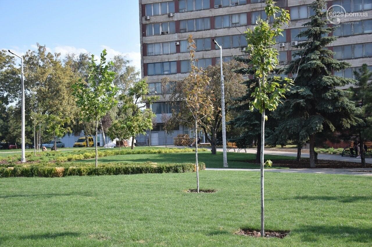 На Греческой площади в Мариуполе засыхают кустарники, но зазеленел газон, - ФОТОРЕПОРТАЖ, ВИДЕО, фото-36