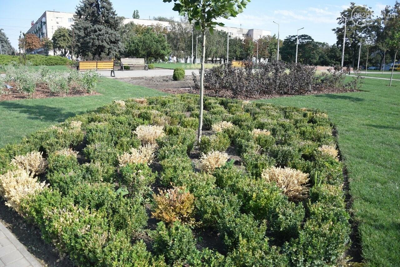 На Греческой площади в Мариуполе засыхают кустарники, но зазеленел газон, - ФОТОРЕПОРТАЖ, ВИДЕО, фото-27
