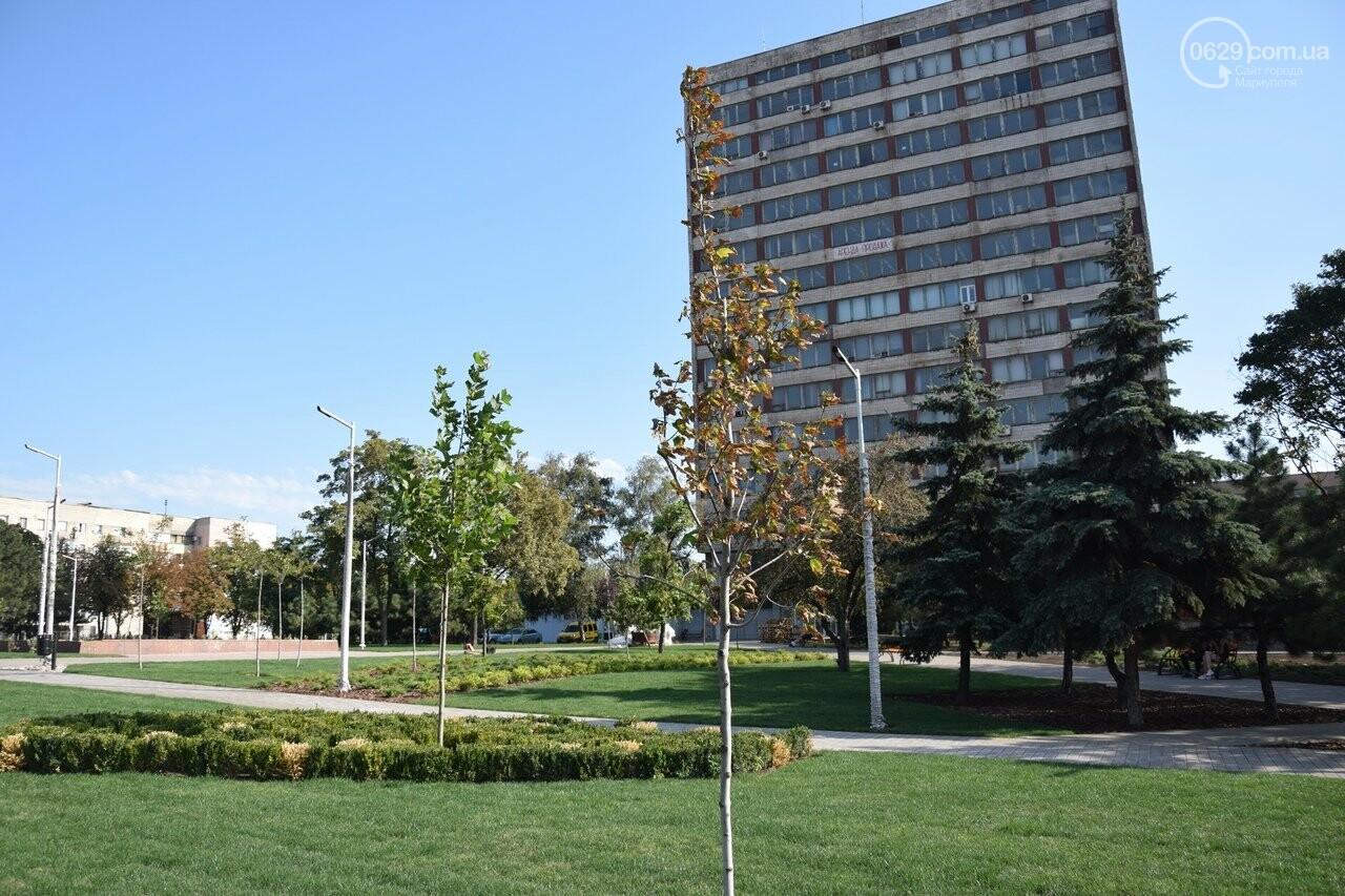 На Греческой площади в Мариуполе засыхают кустарники, но зазеленел газон, - ФОТОРЕПОРТАЖ, ВИДЕО, фото-35