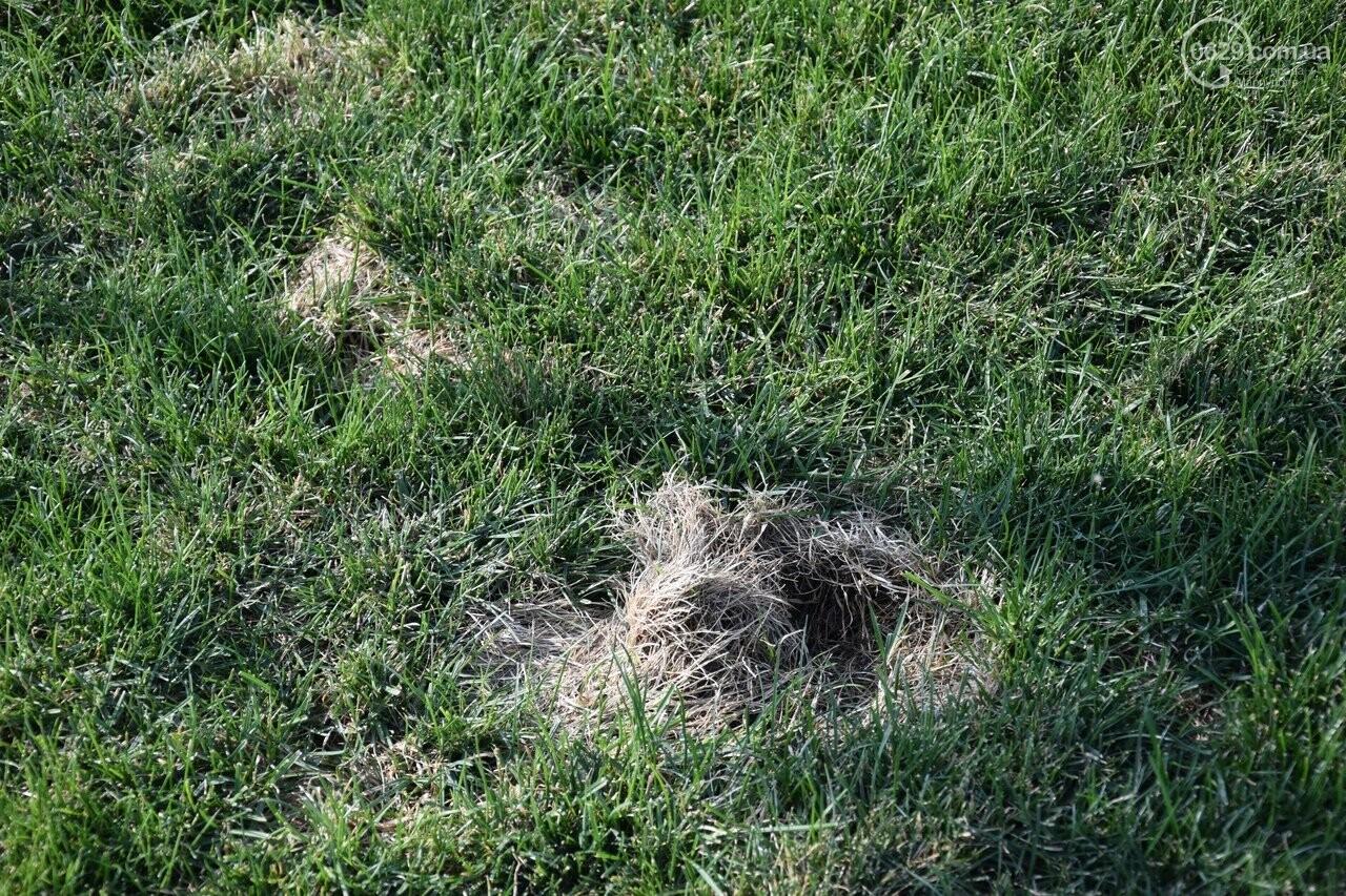 На Греческой площади в Мариуполе засыхают кустарники, но зазеленел газон, - ФОТОРЕПОРТАЖ, ВИДЕО, фото-15