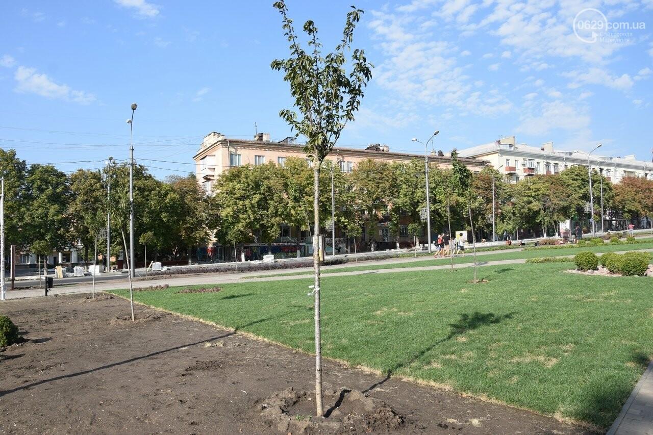 На Греческой площади в Мариуполе засыхают кустарники, но зазеленел газон, - ФОТОРЕПОРТАЖ, ВИДЕО, фото-63