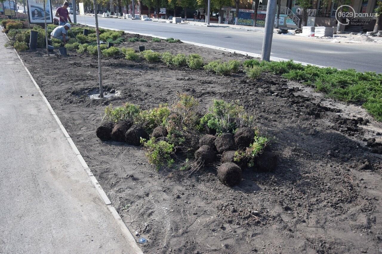 На Греческой площади в Мариуполе засыхают кустарники, но зазеленел газон, - ФОТОРЕПОРТАЖ, ВИДЕО, фото-39