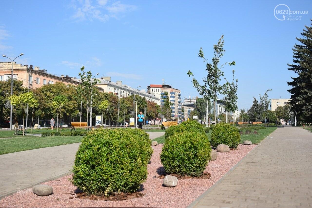 На Греческой площади в Мариуполе засыхают кустарники, но зазеленел газон, - ФОТОРЕПОРТАЖ, ВИДЕО, фото-52