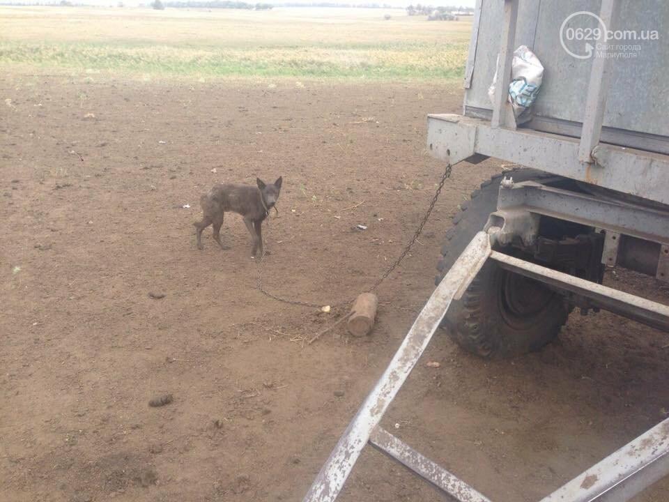Под Мариуполем неизвестные совершили разбойное нападение на отару овец, -Дополнено, ФОТО, фото-9