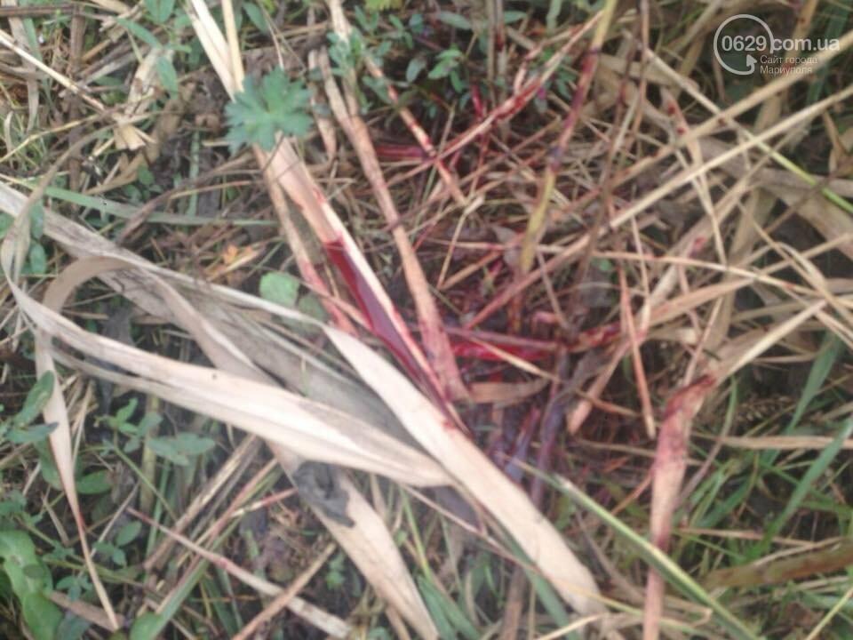 Под Мариуполем неизвестные совершили разбойное нападение на отару овец, -Дополнено, ФОТО, фото-8