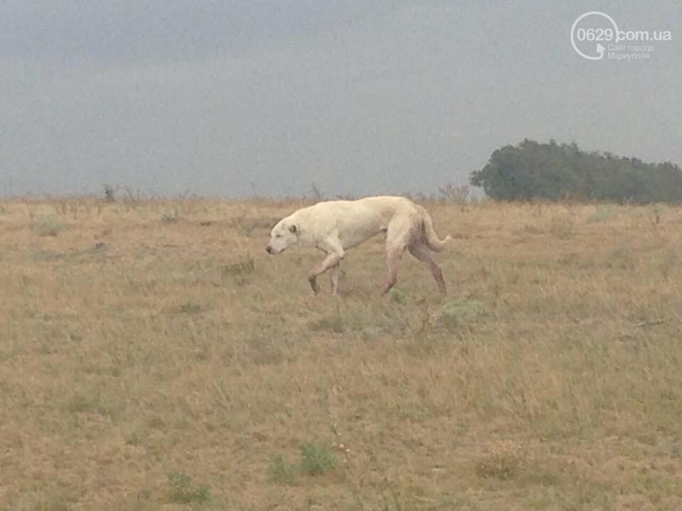 Под Мариуполем неизвестные совершили разбойное нападение на отару овец, -Дополнено, ФОТО, фото-5