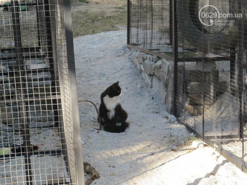 Мариупольский двор засыпают 100 тоннами шлака, - ФОТО, фото-7