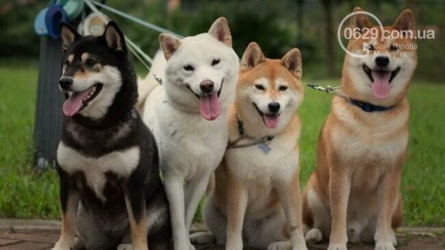День украинского казачества, выставка собак и форум толерантности: чем заняться на выходных, фото-1