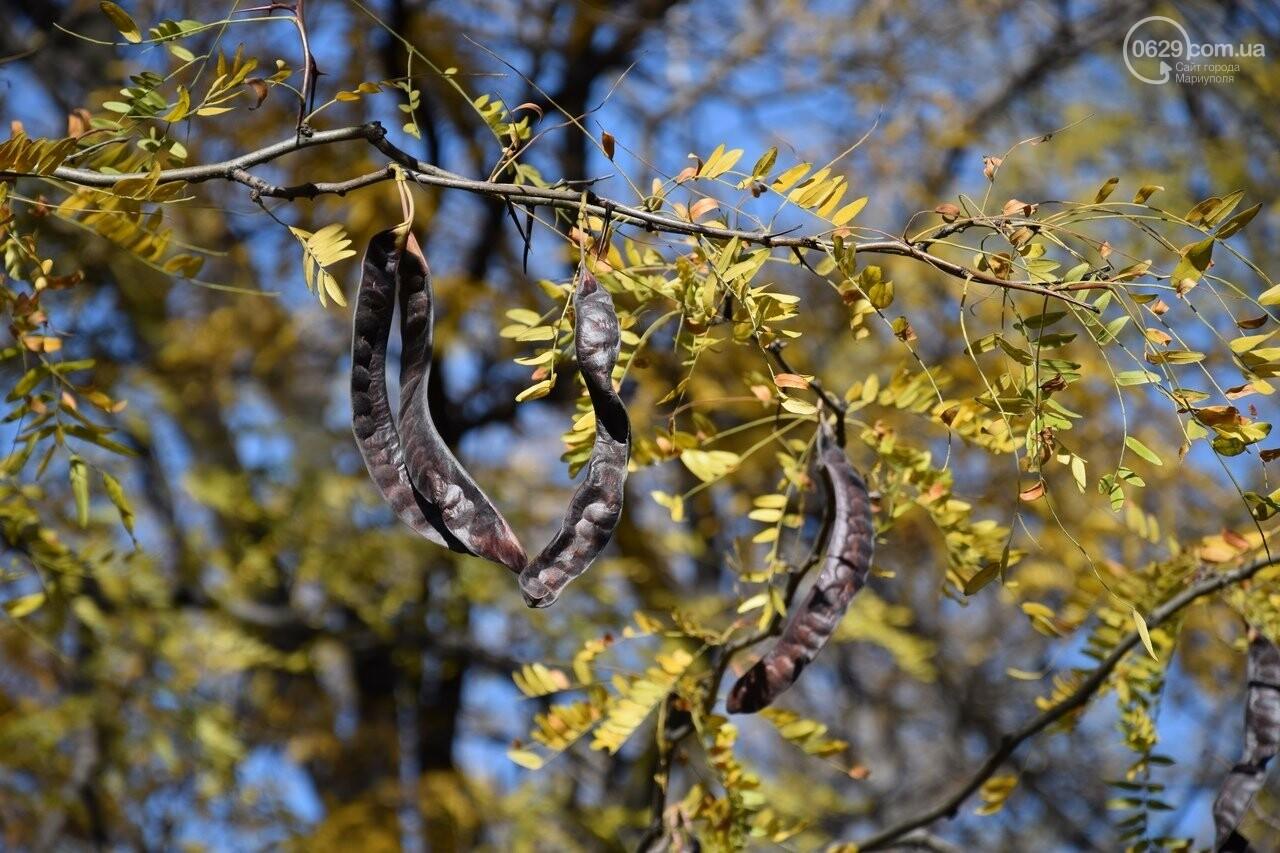 Мариуполь ловит теплое дыхание осени, - ФОТОРЕПОРТАЖ, фото-15