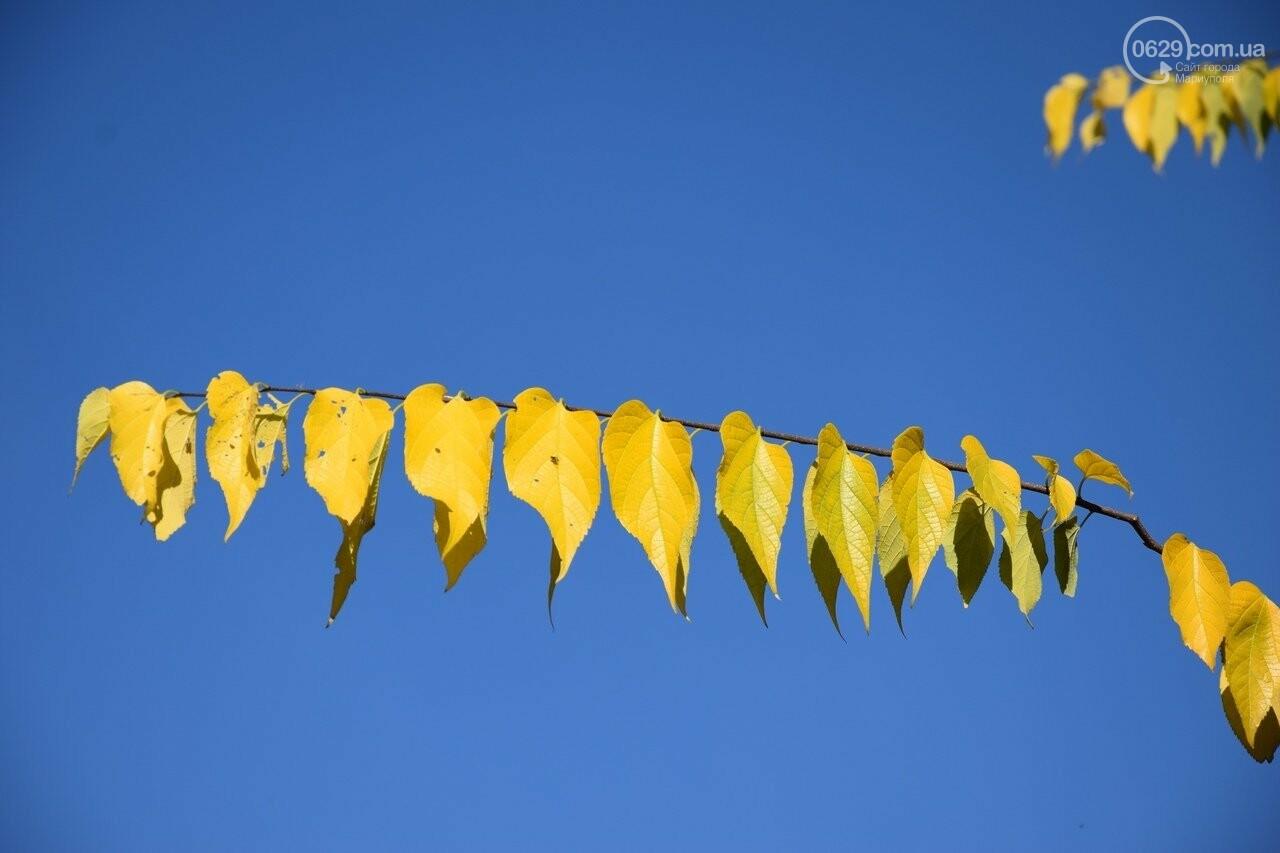 Мариуполь ловит теплое дыхание осени, - ФОТОРЕПОРТАЖ, фото-3