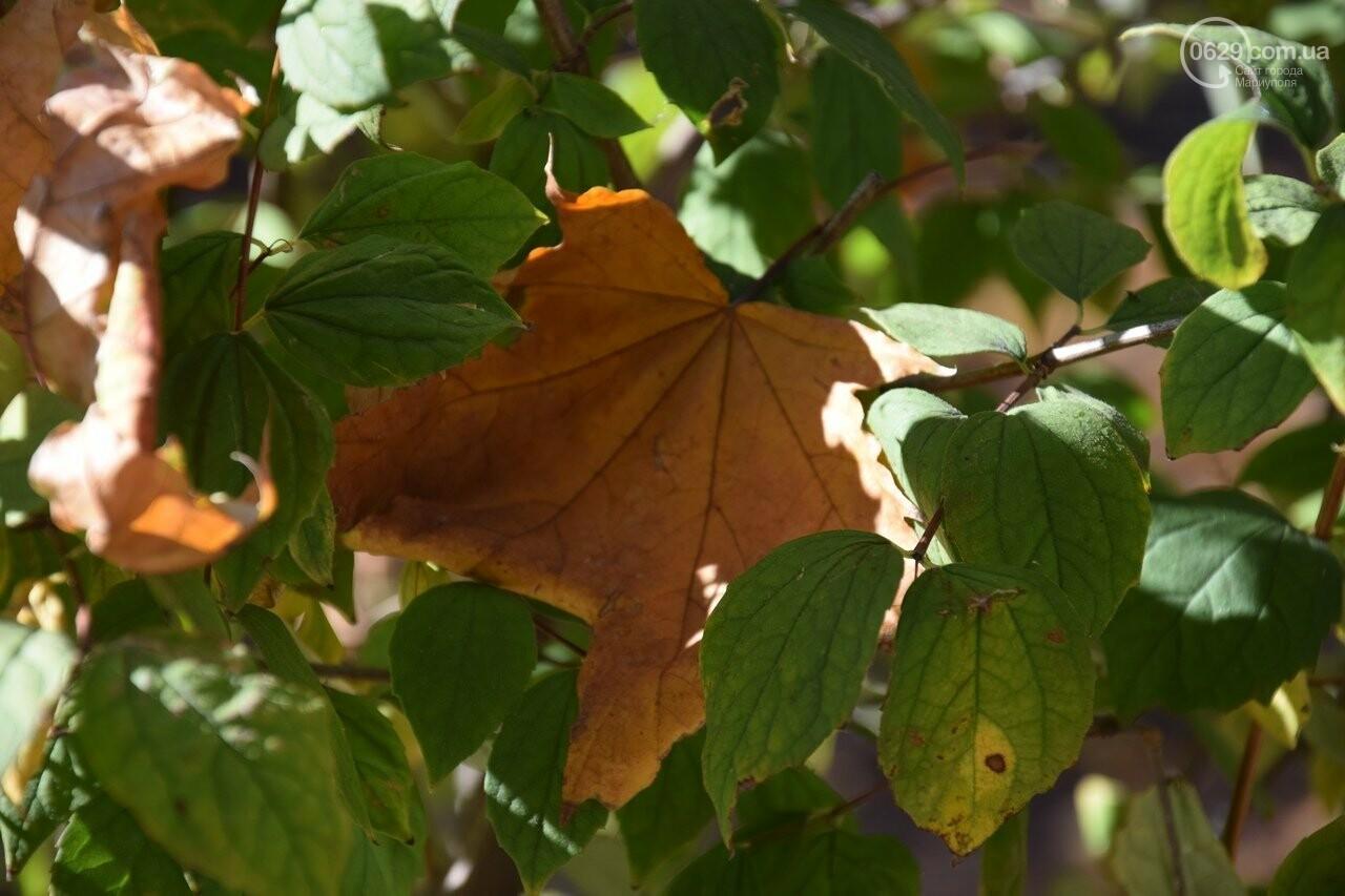 Мариуполь ловит теплое дыхание осени, - ФОТОРЕПОРТАЖ, фото-10
