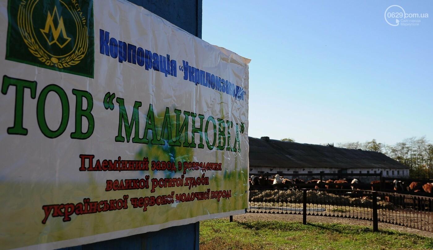 Юрий Тернавский: «Мариупольский молокозавод может напоить молоком каждого жителя Мариуполя и Приазовья», фото-35