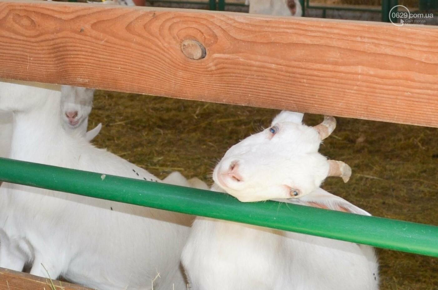 Юрий Тернавский: «Мариупольский молокозавод может напоить молоком каждого жителя Мариуполя и Приазовья», фото-41