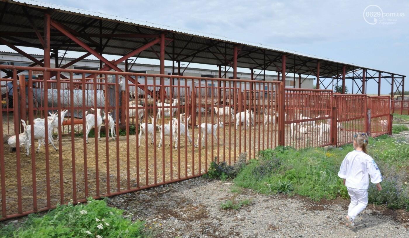 Юрий Тернавский: «Мариупольский молокозавод может напоить молоком каждого жителя Мариуполя и Приазовья», фото-43
