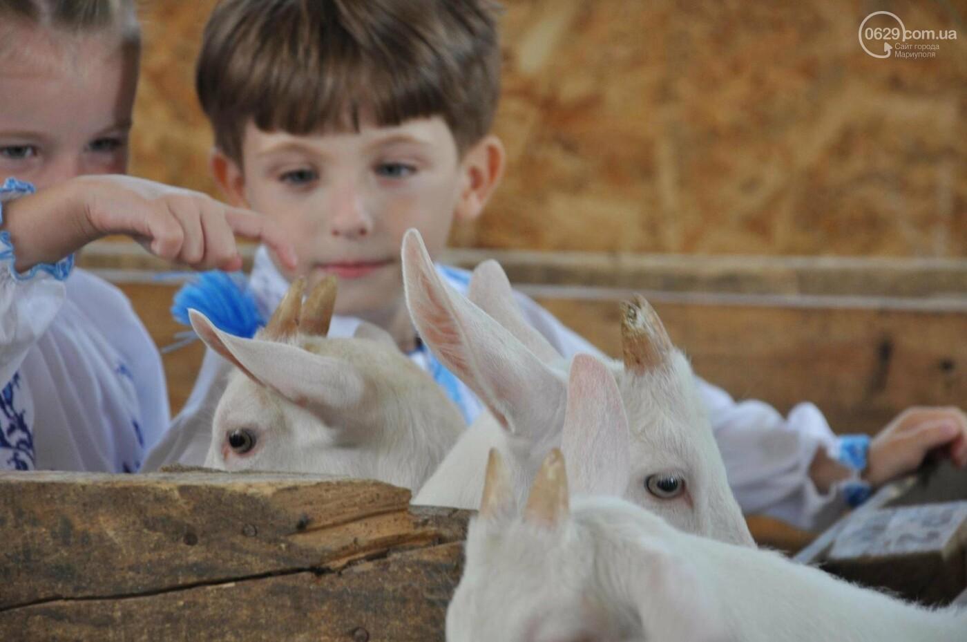Юрий Тернавский: «Мариупольский молокозавод может напоить молоком каждого жителя Мариуполя и Приазовья», фото-46