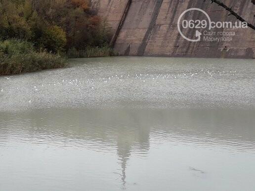"""В Мариуполе вода  под фильтровальной станцией """"Воды Донбасса"""" стала белой, - ФОТОФАКТ, фото-1"""