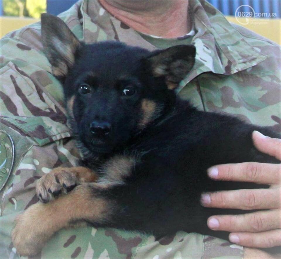 Самый известный пес Донецкой полиции остался без первого хозяина, фото-1