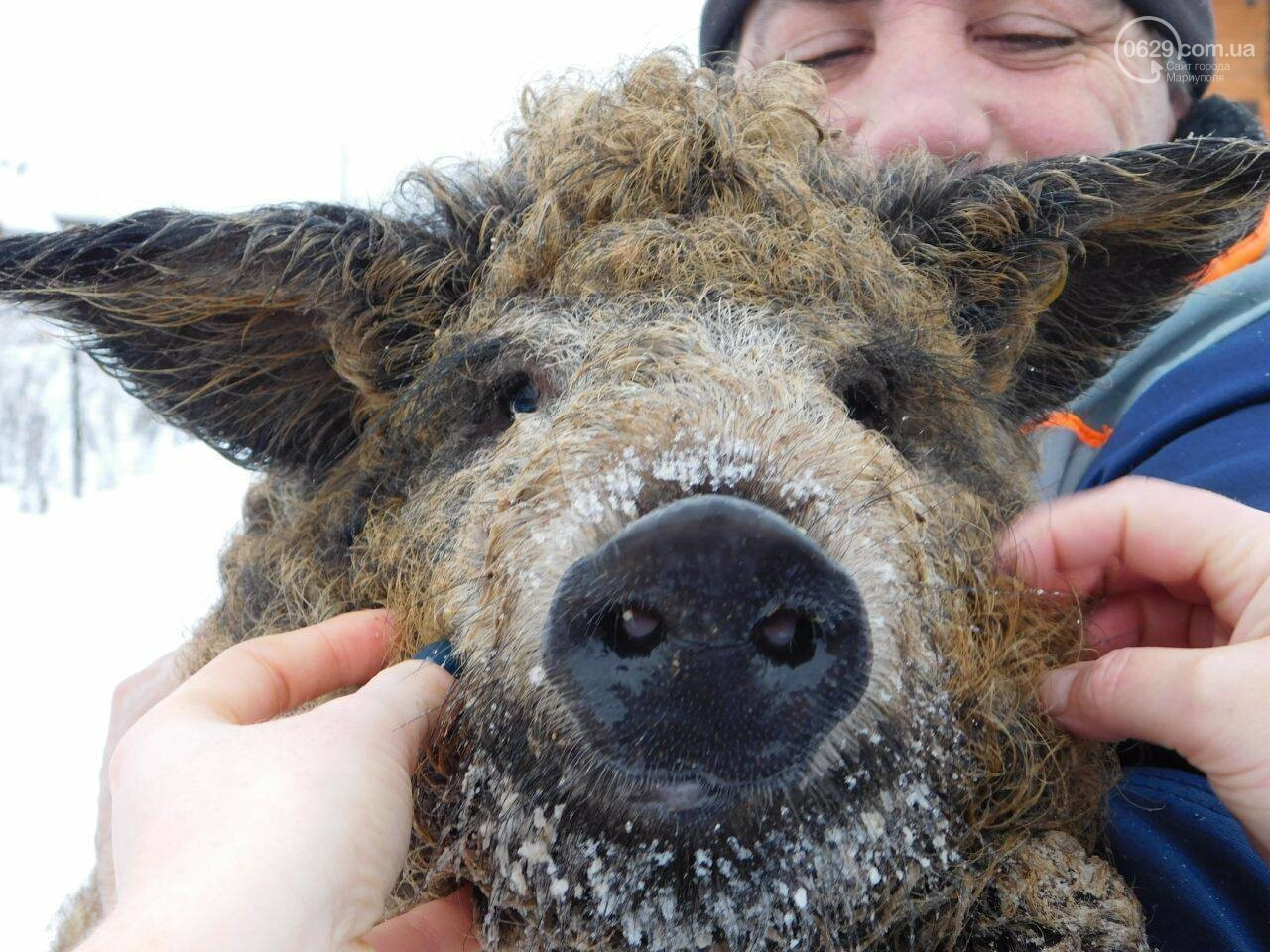 Селфи со свиньей: определили победителей конкурса, - ФОТО, фото-1