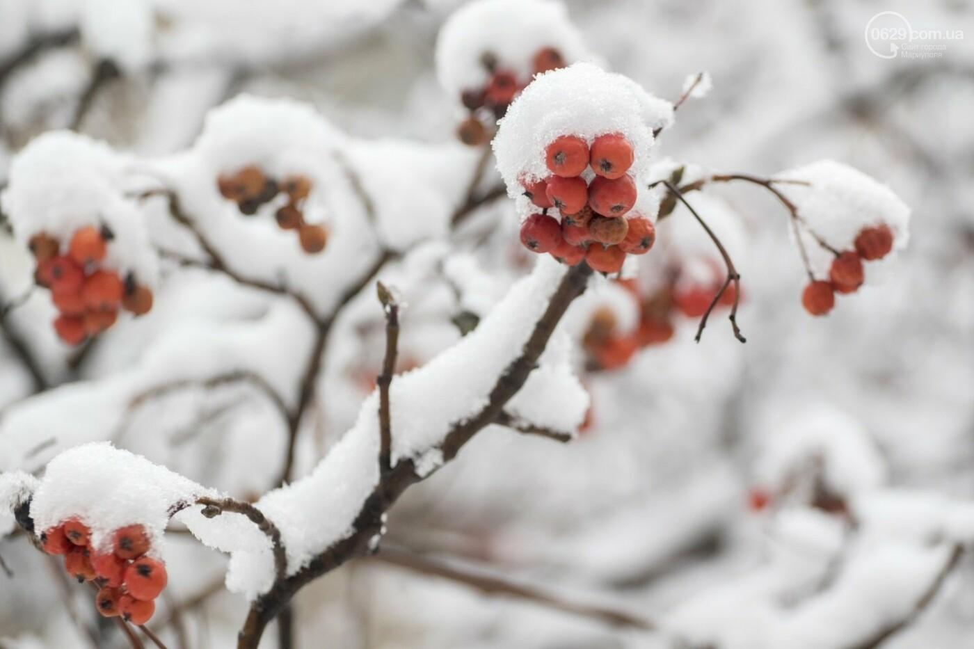 38 фотографий, одна ворона и одна синица... ФОТОРЕПОРТАЖ для тех, кто проспал первый настоящий снег, фото-1