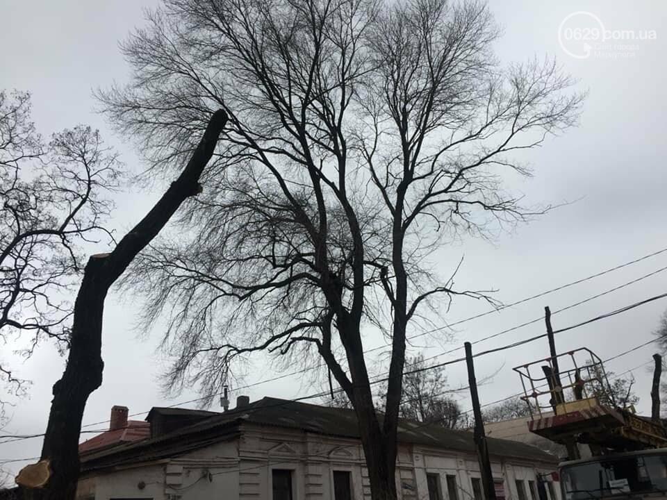В старом центре города мариупольцев оставили без тени из-за сломанной ветки  и одного автомобиля, - ФОТО, фото-3