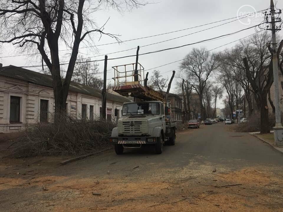 В старом центре города мариупольцев оставили без тени из-за сломанной ветки  и одного автомобиля, - ФОТО, фото-1