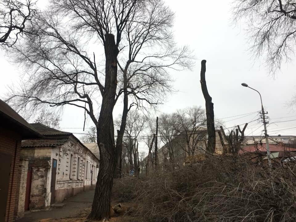 В старом центре города мариупольцев оставили без тени из-за сломанной ветки  и одного автомобиля, - ФОТО, фото-2