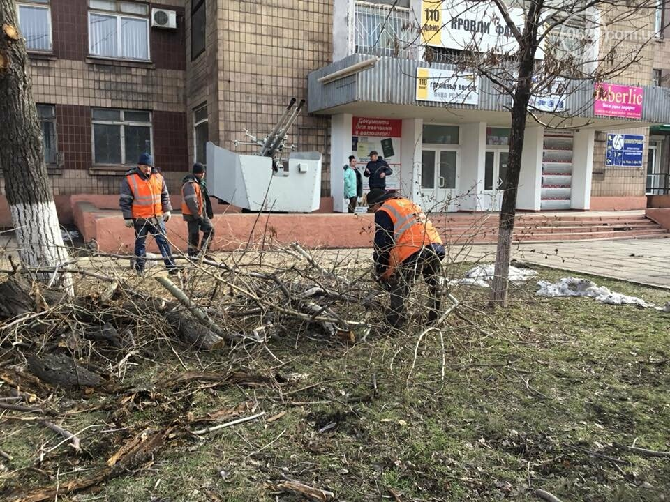 В Мариуполе зеленстроевцы расправляются с деревьями, - ФОТО, ВИДЕО, фото-2