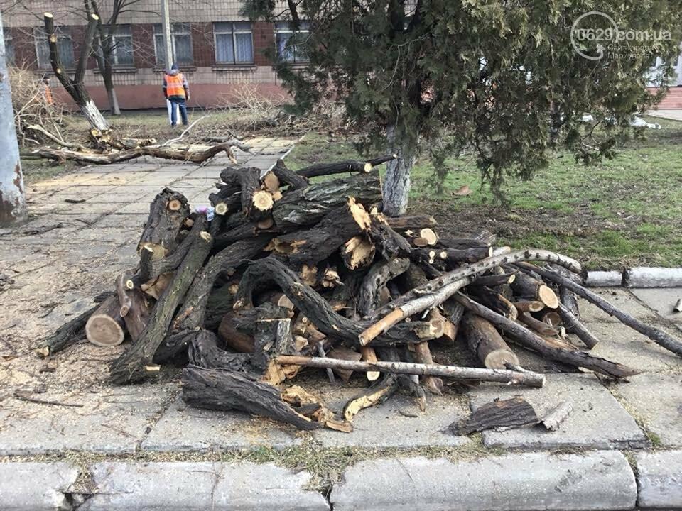 В Мариуполе зеленстроевцы расправляются с деревьями, - ФОТО, ВИДЕО, фото-3