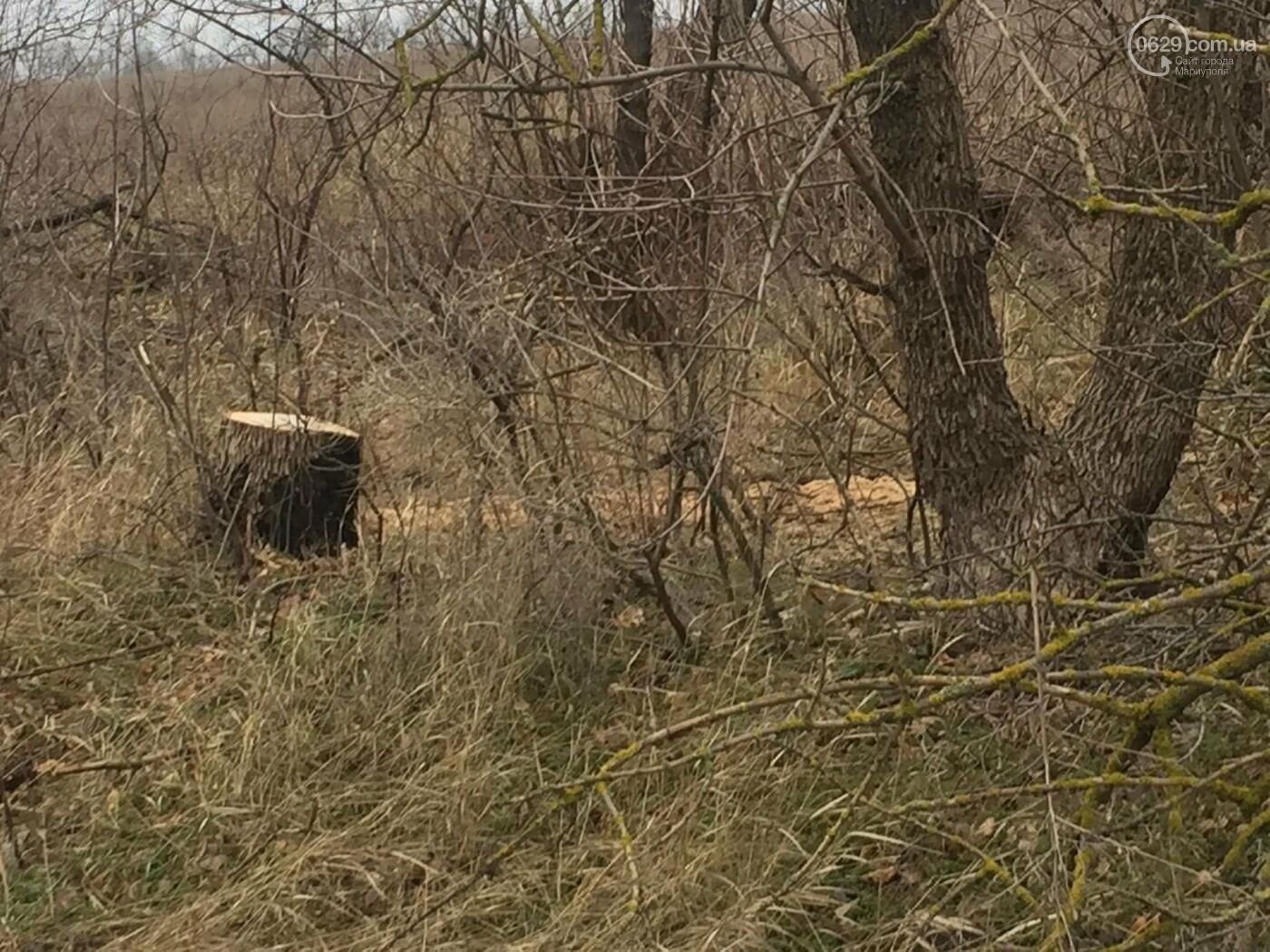 Черные лесорубы: в Мариуполе  беспощадно уничтожается лесополоса на дороге для европейцев, - ФОТО, ВИДЕО, фото-4