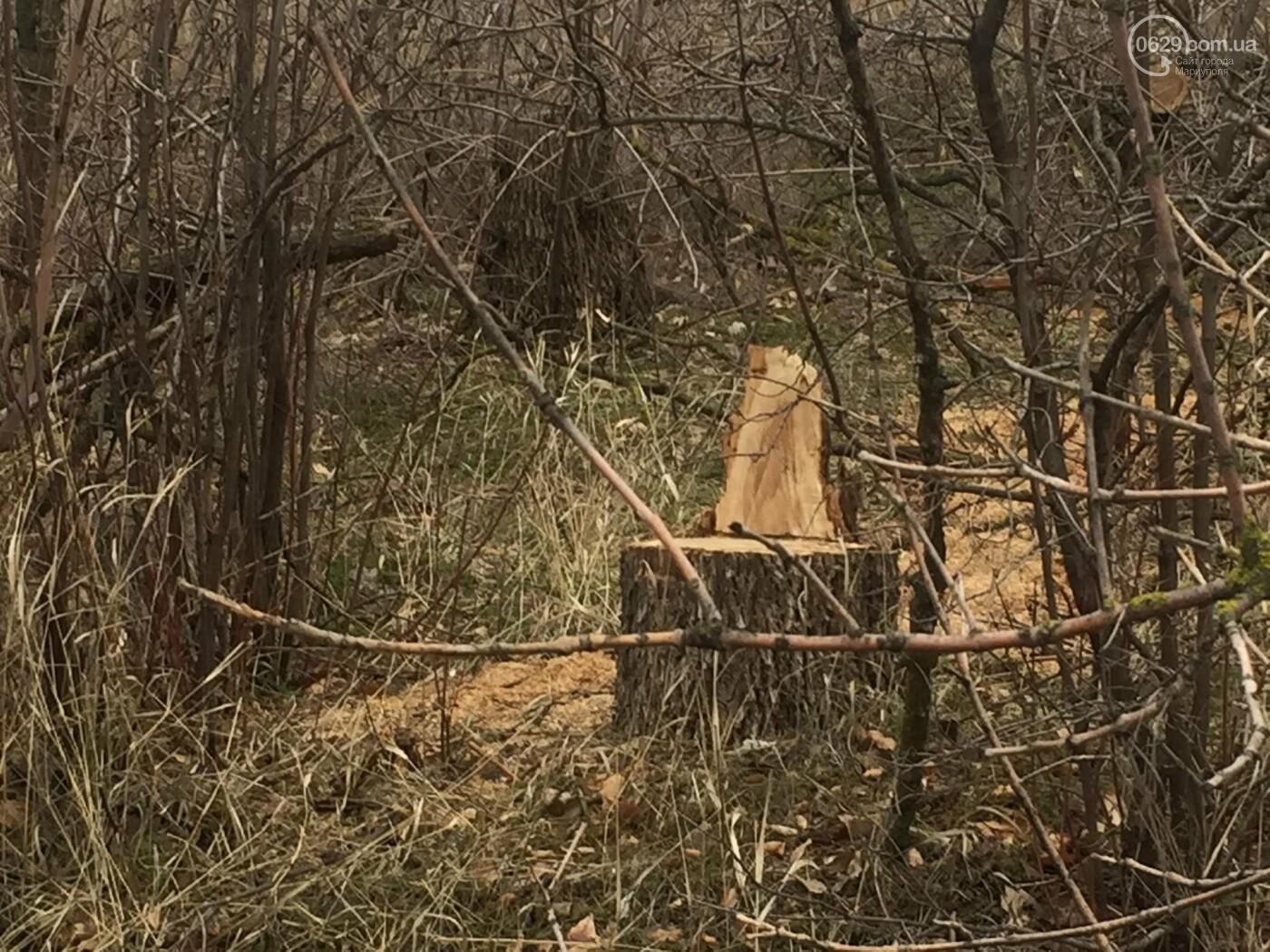 Черные лесорубы: в Мариуполе  беспощадно уничтожается лесополоса на дороге для европейцев, - ФОТО, ВИДЕО, фото-8